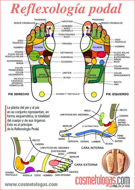Mapa Reflexologia Podal Pdf.Mapa De Reflexologia Podalreflexologia Pie Medicina